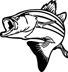 Bass Fish Drawing Stripped Colouring Page