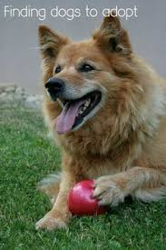 Small Non Shedding Dogs For Adoption by Best Small Dogs For Kids With Allergies Allergies Dog And