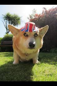 1000 images about Corgi on Pinterest