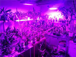 LED Grow Lights has be e the technology for Indoor plantation