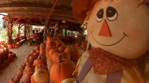 Central Wisconsin Pumpkin Patches by Pumpkin Days U0026 Corn Maze Az Field Of Screams Tolmachoff Farms