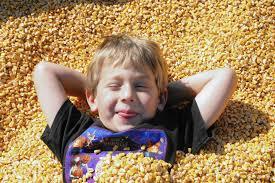 Siegels Pumpkin Farm by Pick A Pumpkin At Suburban Farms Aurora Beacon News