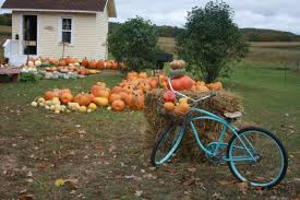 Pumpkin Patch Avon Ct by The 12 Best Pumpkin Patches In Minnesota For 2016