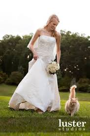 cat wedding dress the for cats in weddings cat wedding wedding and cat