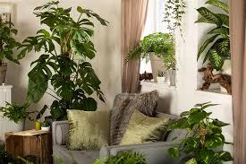 zimmerpflanzen bei heizungsluft pflege und tipps
