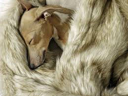Ideas: Ultimate Faux Fur Blanket In Luxurious Comfort ... Instyledercom Luxury Fashion Designer Faux Fur Throws Throw Blanket Target Pottery Barn Fniture Elegant White The Ultimate In Luxurious Natural Arctic Leopard Limited Edition Blankets Awesome For Your Home Accsories And Chrismartzzzcom Decorating Using Comfy Lovely King Modern Teen Pbteen Oversized 60x80 Sun Bear Brown Sofa Cover