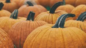 Oklahoma Pumpkin Patches by How To Celebrate Halloween Right With This Houston Area