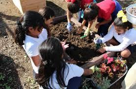 The Collective School Garden Network