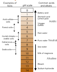 100 Ph Of 1 Figure From Examples Of Soils PH Scale Common Acids And