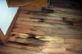 Hardwood Floor Buckled Water by Rotting Basement Floors Basement Flooring Damaged By Rot Mold