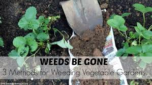 fall how to prevent weeds in a ve able garden Weeds Be Gone