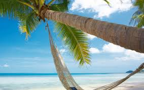 Hammock A Palm Tree Wallpaper Download Wallpaper Nature Free