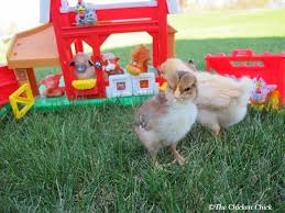 The Chicken Chick®: How To Build A Better Brooder For Raising Baby ... The Chicken Chick 15 Tips To Control Rodents Around Coops Bbara Obrien Photography News 2012 Horse And Barn Cat Happy Cats Rescue San Diego Susys Musings How Build A Better Brooder For Raising Baby Chicken House Turtle Rock Farm Care Feeding Of Timber Creek Barn Cats Shibumo Sneek Thief Backyard Chickens 1110 Best Chickens Images On Pinterest Backyard Adoption Program Animal Allies Humane Society