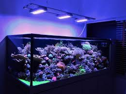 eclairage led pour aquarium eau de mer ai hydra 52 hd black 136w re leds haute puissance pour l