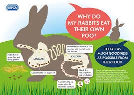 Can Bunny Rabbits Eat Pumpkin Seeds by Rabbit Diet Rabbit Welfare Tips Advice Health