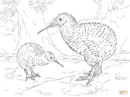 Cheerful Kiwi Animal Coloring Pages Click The Great Spotted To View Printable Version Or Color