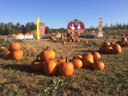 Columbus Ohio Pumpkin Patches by 9 Pumpkin Patches To Visit Near Columbus This Fall Interactive Map