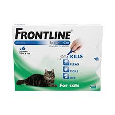 flea treatment for cats best 25 flea treatment cats ideas on flea