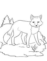 Spectacular Idea Fox Animal Coloring Pages FREE Artic Page For Kids Winter Hibernating