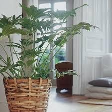 schöne zimmerpflanzen living at home