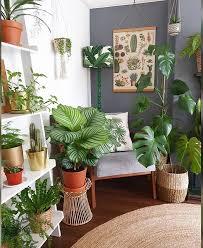 plant corner wohnzimmer pflanzen zimmerpflanzen ideen