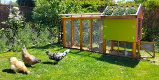 Backyard Chickens 101 @ San Mateo Private Residence - 23 JUL 2017 Backyard Chickens 101 The Moms Guide To San Diego Amazoncom Complete Beginners Lauren Diamant Are Hard Workers In Our Bnyard Every Animal We Raise Renew Pinterest Flock Has A Complex Social Hierarchy With Singular Leader Raising For Dummies Modern Farmer Sister Chicks Club House Backyard Home Cluck Central Cedar Falls Iowa Public Radio 2015 Fact Sheet Chicken Egg 141 Best Images On