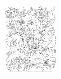 Coloring Pages Flowers Spring Cartoon And Butterflies Printables For Adults Adult Tangle Set