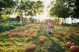 Pumpkin Patch Nashville Area by Walden Farm Tn In Smyrna Tn Nashville Haunted Houses