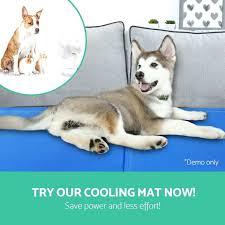 cooling dog beds korrectkritterscom