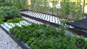 Introduction To The AES Aquaponics System - YouTube Hydroponic Home Garden Backyard Food Solutionsbackyard Oc Aquaponics Project Admin What Is Learn About Aquaponic Plant Growing Photos Friendly Picture With Amusing Systems Grow 10x The Today Bobsc Ezgro Amazoncom Vertical Gardening Vegetable Tower Indoor Outdoor From Fish To Ftilizer Greenhouse Im In My City Back Yard Yes I Am Satuskaco