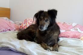 darf der hund im bett schlafen dipthdesign hundehalsband shop