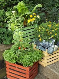 Edible Flowers Like Calendula And Signet Marigolds Brighten A Planting Of Swiss Chard Cabbage