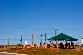 Piedmont Service Center Pumpkin Patch by Greensboro Daily Photo Schools