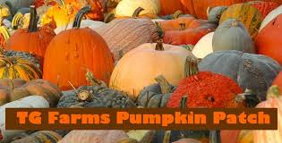 Pumpkin Patches In Okc by Tg Farms Home Facebook