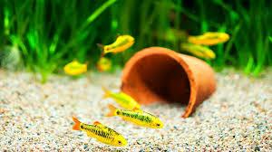 Spongebob Aquarium Decor Set by How To Pick Fish Tank Decorations Aquarium Care Youtube