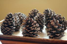 Pine Cone Christmas Tree Decorations by Pine Cones On Your Christmas Tree Progressive Pioneer