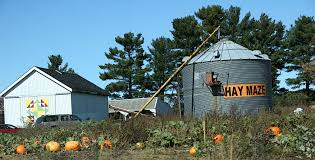 Central Wisconsin Pumpkin Patches by Harvesting Photo Ops In Rural Minnesota And Rural Wisconsin