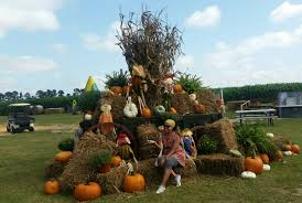 Pumpkin Patch Farms Raleigh Nc by Visit Nc Sobesavvy