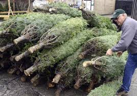 Christmas Tree Amazon Local by Christmas Trees Accepted At Allegheny County Parks For Recycling
