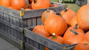 Chatham Kent Pumpkin Patches by The Top 10 Best Places To Pumpkin Pick In The Pittsburgh Area