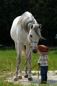 Little Cowboy And His Sweet Horse! | Majestic Horses | Pinterest ... Tennessee Weather Sleipnir Morgan Horse Farm Blog Build Compost Pile And Spread Manure Little Backyard World In My Life Of Lisa Laporte Electric Tape Fence Home Gardens Geek Becca Gem Backyard Horse Jumping Youtube Free Images Fence Animal Wall Shed Paint What Exactly Is A Roan Expert Advice On Care Order Blind Lonely Getting Older California Finds New Friend Sculpture Patricia Borum Cqright Otographs The Assembled 14 Camp Expo Pics Catskill Arabian Horses Texas Ranch Sullivan