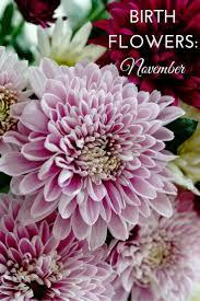 37 Elegant November Birth Flower