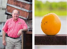 ON THE FARM Clockwise Tim Brown And Son Travis Browns Grove Harvesting Freshly Picked Oranges Dean Mixon Fruit Farm A Lopsided Orange