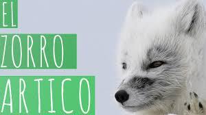 Imagenes De Zorro Artico Para Colorear Alimentación De Los Lobos