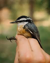 Bird Banding Recap