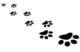 cat paw prints free illustration paw print cat footprint free image