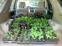 100 Seedling Truck Journey To The Rooftop St Roses Garden CSA