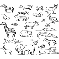 Dibujos Para Colorear De Animales Oviparos Zoologico Para Colorear