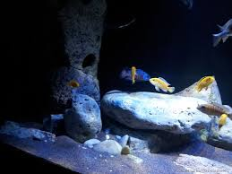Extra Large Aquarium Ornaments by Example No 30933 From The Category Lake Malawi