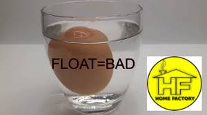 bad eggs float or sink egg water test or bad eggs how to check egg is or